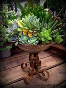 Creative diy indoor succulent garden ideas (28)
