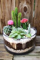 Creative diy indoor succulent garden ideas (3)