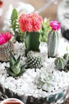Creative diy indoor succulent garden ideas (30)