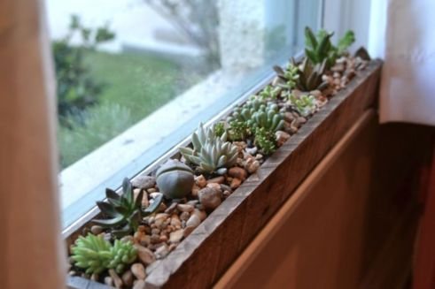 Creative diy indoor succulent garden ideas (35)