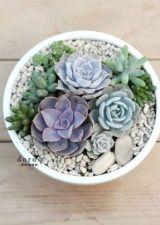 Creative diy indoor succulent garden ideas (37)