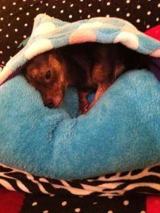Admirable diy pet bed 15