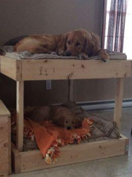 Admirable diy pet bed 24