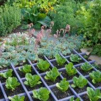 Awesome ways to creatively edge your garden 19