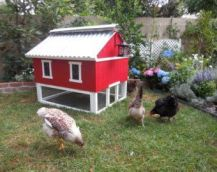 Extraordinary chicken coop decor ideas 02