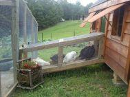 Extraordinary chicken coop decor ideas 03