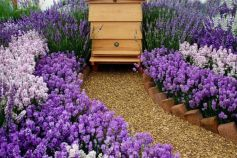 Stunning bee friendly garden designs for more productive gardens 24