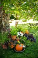 Impressive fall flowers to plant in your garden 08