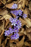 Impressive fall flowers to plant in your garden 09