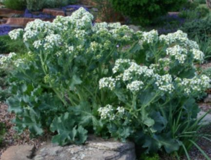 Impressive fall flowers to plant in your garden 10
