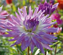 Impressive fall flowers to plant in your garden 16