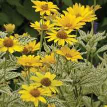 Impressive fall flowers to plant in your garden 17