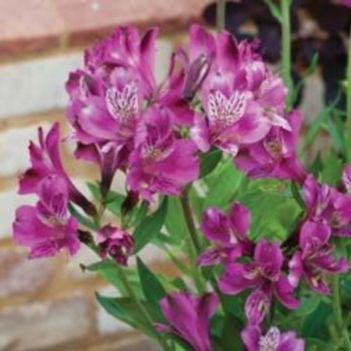 Impressive fall flowers to plant in your garden 22