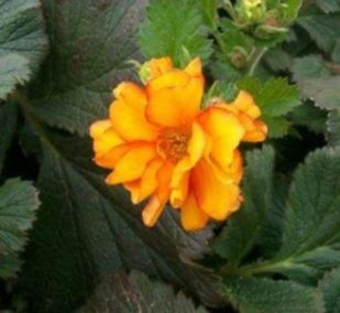 Impressive fall flowers to plant in your garden 25