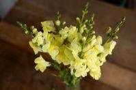 Impressive fall flowers to plant in your garden 26