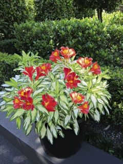 Impressive fall flowers to plant in your garden 27