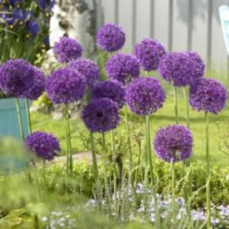 Impressive fall flowers to plant in your garden 37