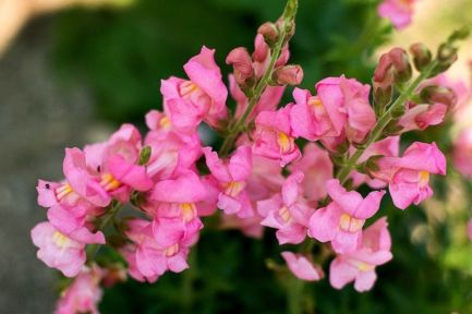 Impressive fall flowers to plant in your garden 40