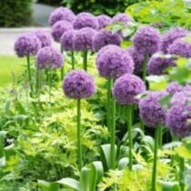 Impressive fall flowers to plant in your garden 42