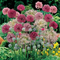 Impressive fall flowers to plant in your garden 43