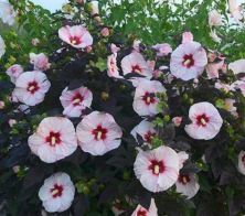 Impressive fall flowers to plant in your garden 47