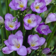 Impressive fall flowers to plant in your garden 50