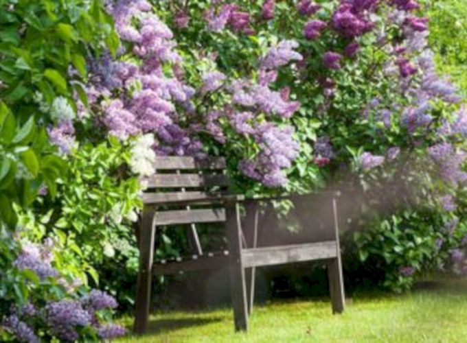 Lovely flowering tree ideas for your home yard 12