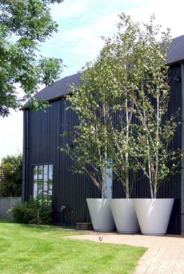 Lovely flowering tree ideas for your home yard 43