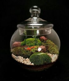 Stunning fairy garden decor ideas 40