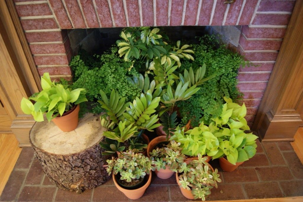Cozy house plants decoration ideas for indoor 02