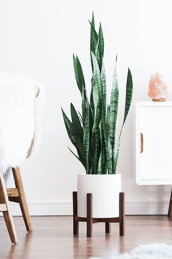 Cozy house plants decoration ideas for indoor 05