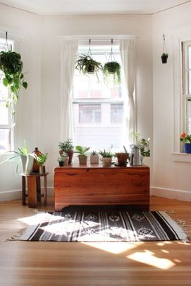 Cozy house plants decoration ideas for indoor 12