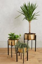 Cozy house plants decoration ideas for indoor 14