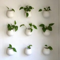 Cozy house plants decoration ideas for indoor 18
