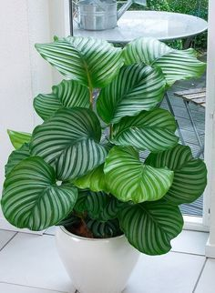 Cozy house plants decoration ideas for indoor 25