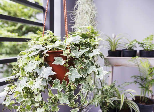 Cozy house plants decoration ideas for indoor 26