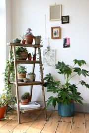 Cozy house plants decoration ideas for indoor 34