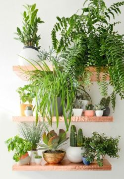 Cozy house plants decoration ideas for indoor 36
