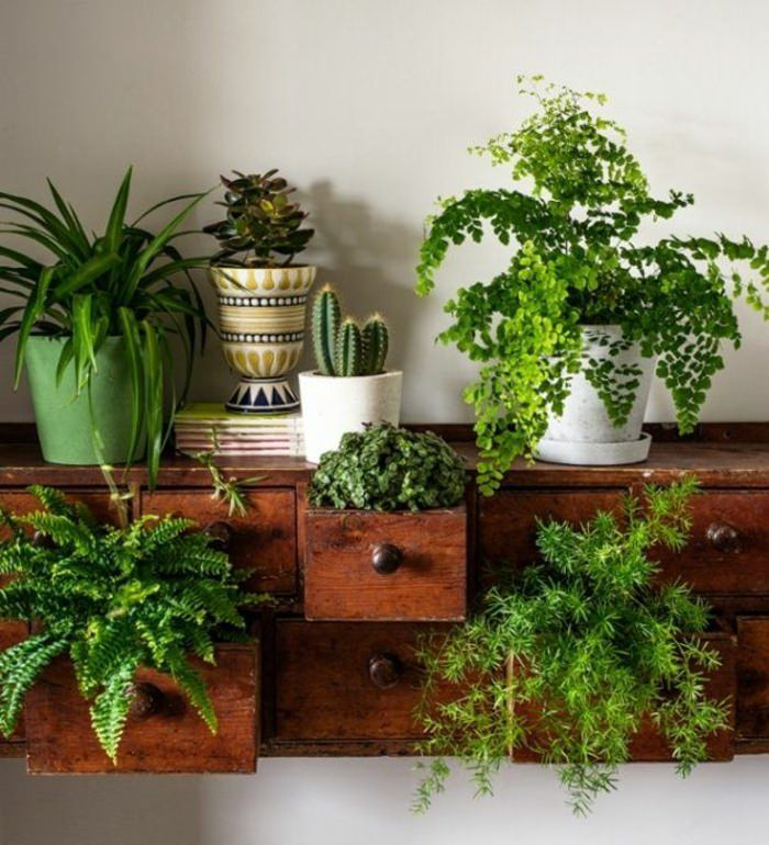 Cozy house plants decoration ideas for indoor 38
