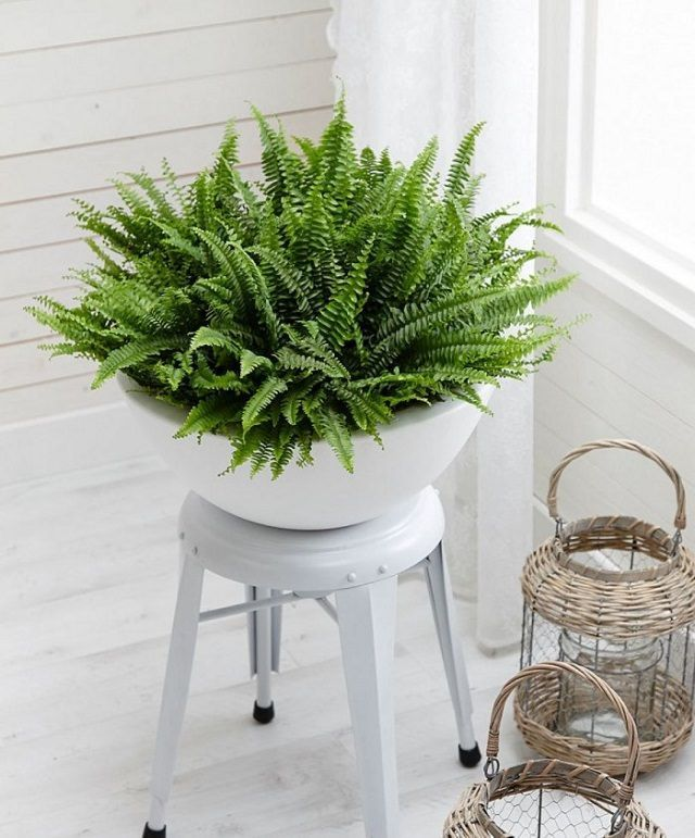 Cozy house plants decoration ideas for indoor 39