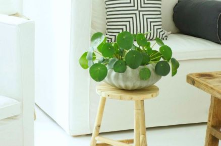 Cozy house plants decoration ideas for indoor 44