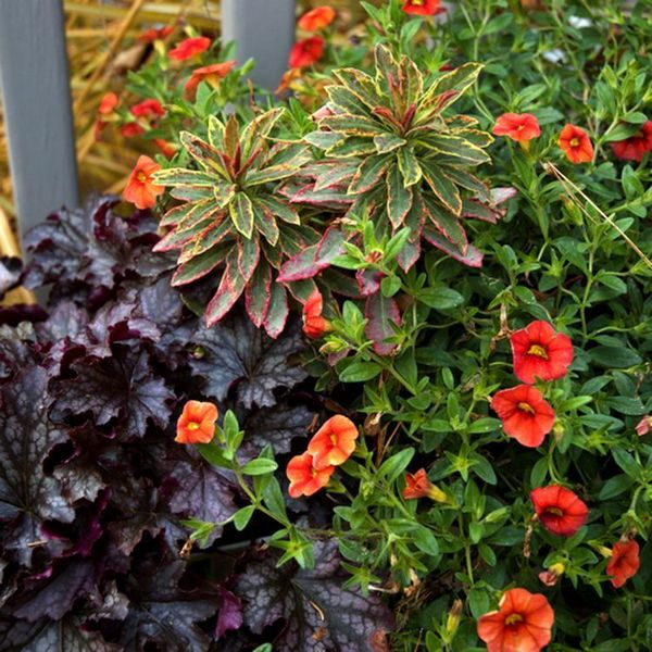 Charming flower beds ideas for shady yards 09