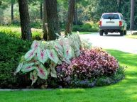 Charming flower beds ideas for shady yards 23