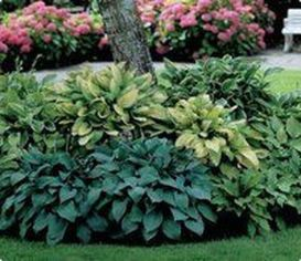 Charming flower beds ideas for shady yards 38