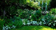 Charming flower beds ideas for shady yards 40