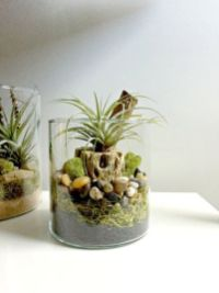 Popular air plant display ideas for home 02