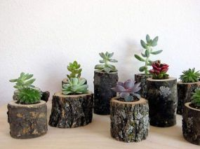 Popular air plant display ideas for home 17