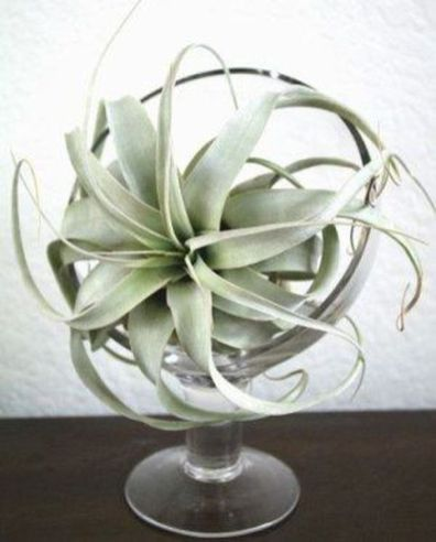 Popular air plant display ideas for home 18
