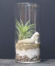 Popular air plant display ideas for home 20