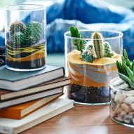 Popular air plant display ideas for home 24